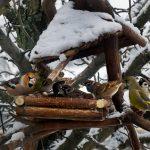 Акция «Поможем птицам зимой»