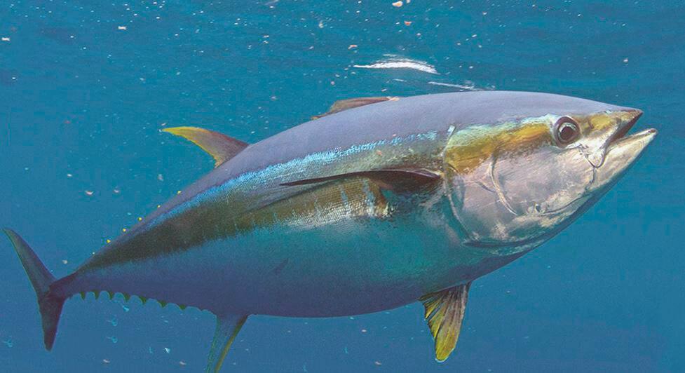 Всемирный день тунца