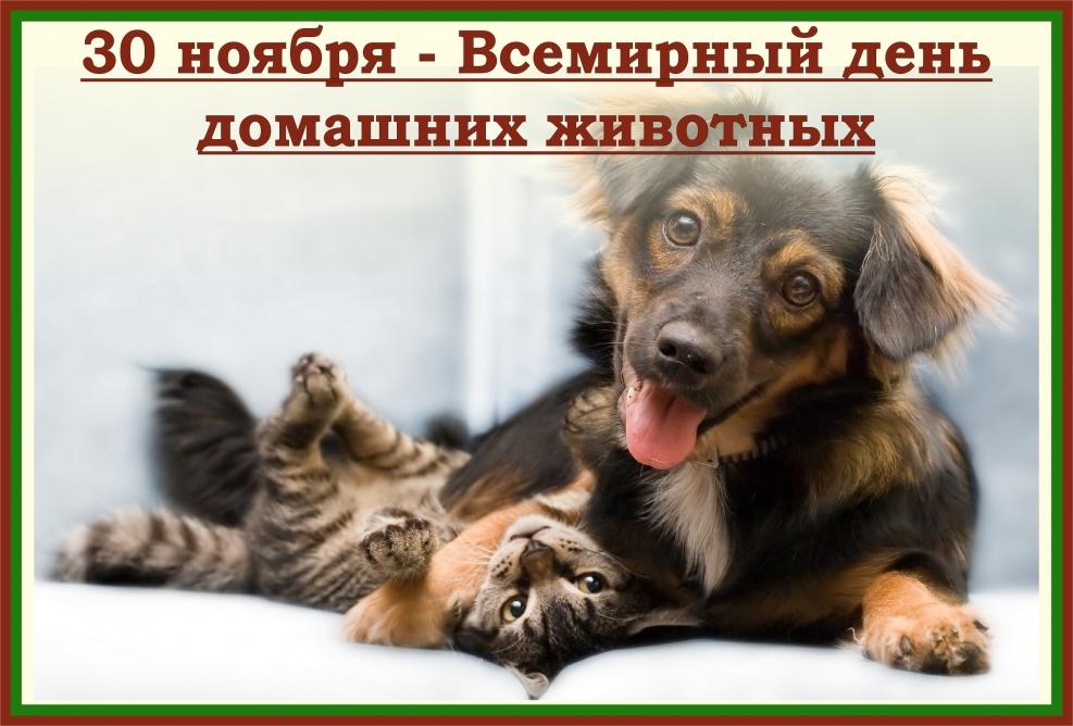 этим открытки день домашних животных тебе любовь благость
