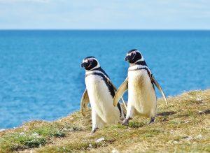 День осведомленности о пингвинах