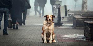 Всемирный День бродячих животных