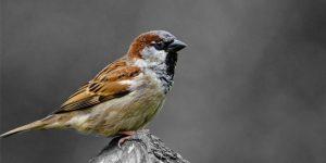 Международный день птиц (День орнитолога)