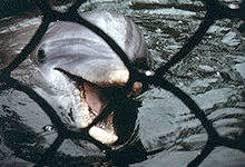 Международный день дельфинов-пленников